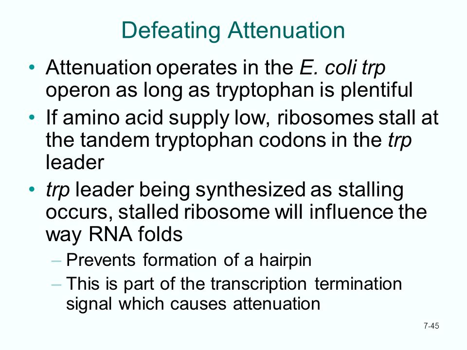 7-45 Defeating Attenuation Attenuation operates in the E. coli trp operon as long as tryptophan is plentiful If amino acid supply low, ribosomes stall