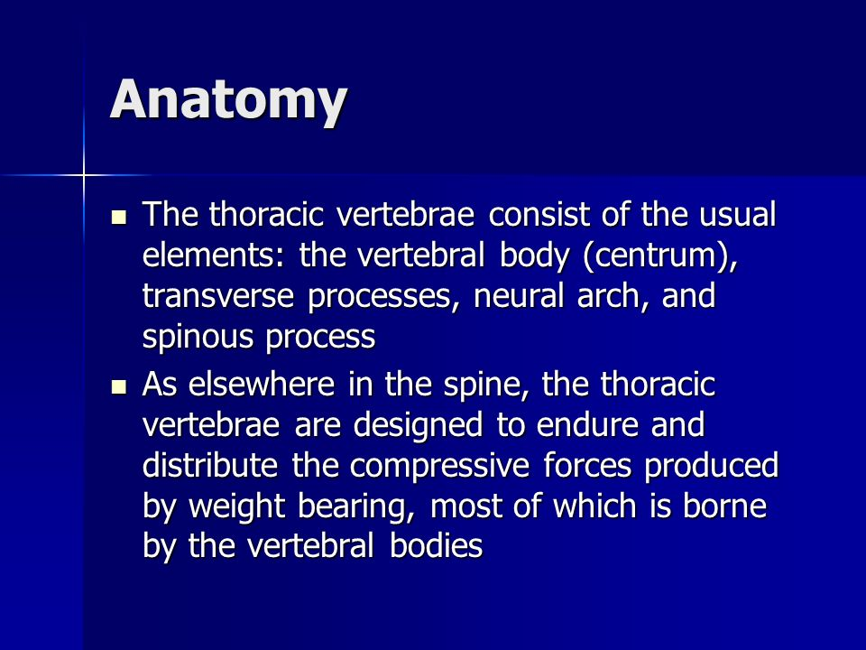 Anatomy The thoracic vertebral body is roughly as wide as it is long so that its anterior-posterior and medial-lateral dimensions are of equal length The thoracic vertebral body is roughly as wide as it is long so that its anterior-posterior and medial-lateral dimensions are of equal length