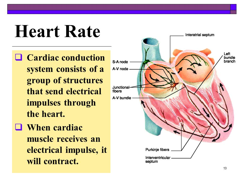 18 Answer Apply Your Knowledge - Answer Lubb – 1 st sound Lubb – 1 st sound - when the ventricles contract and the tricuspid and bicuspid valves snap