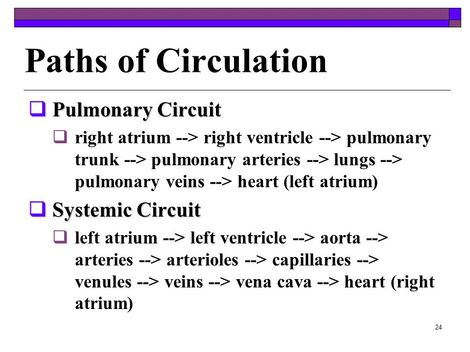 23 Control of Blood Pressure Blood pressure is controlled to a large extent by the amount of blood pumped out of the heart Starling's law of the heart