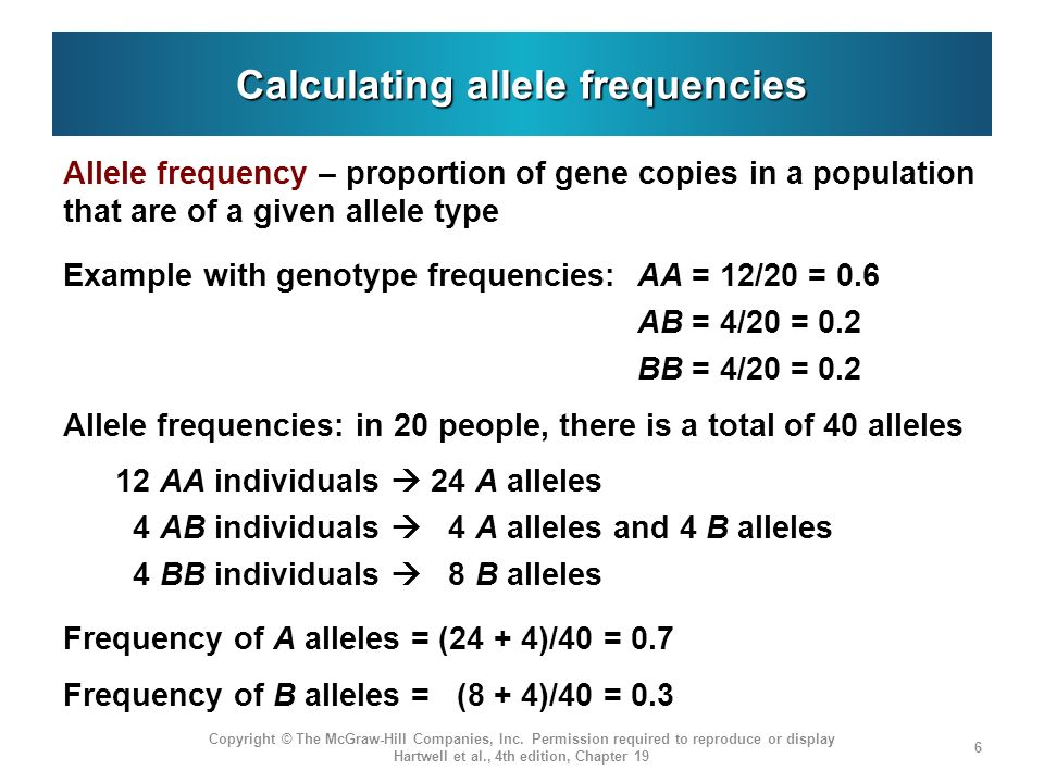 Properties of populations described by Hardy-Weinberg equilibrium Conservation of allele proportions Even though the genotype frequencies can change in the second generation, there will be no change in allele frequencies A stratified population formed from two (or more) distinct populations will become balanced in a single generation At Hardy-Weinberg equilibrium, genotype frequencies will be p 2, 2pq, and q 2 Copyright © The McGraw-Hill Companies, Inc.
