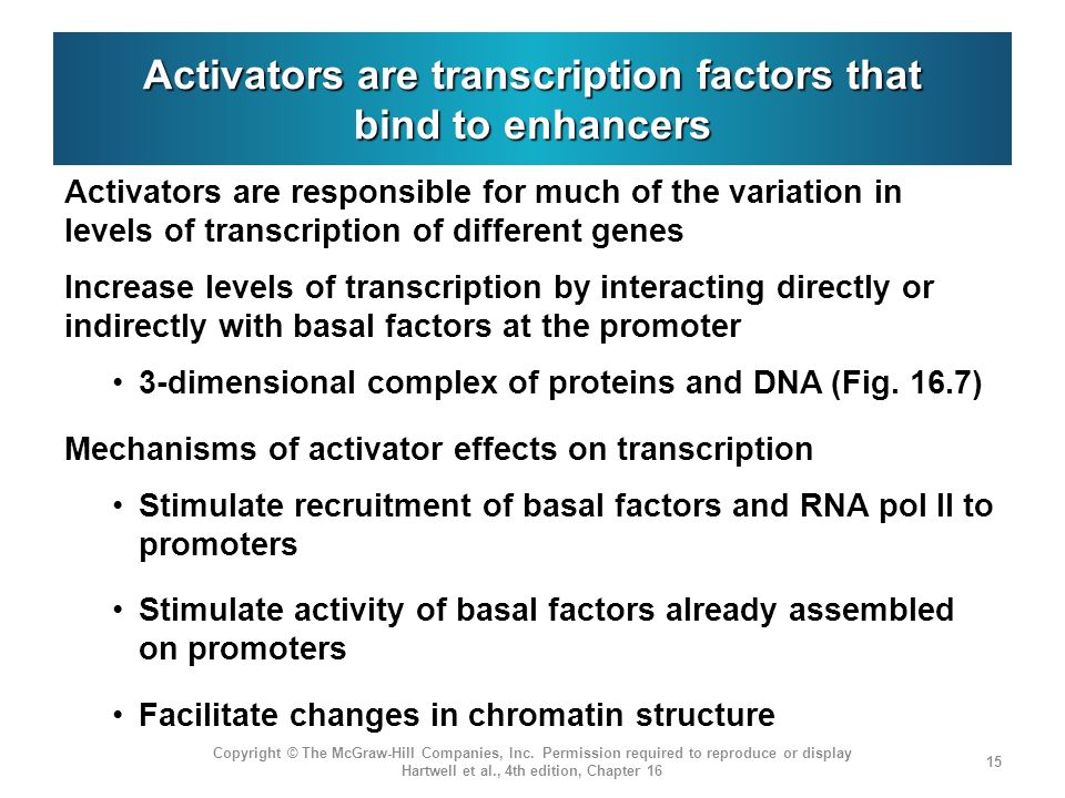 Activators are transcription factors that bind to enhancers Activators are responsible for much of the variation in levels of transcription of differe