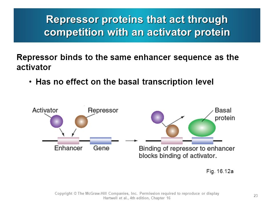 Repressor proteins that act through competition with an activator protein Repressor binds to the same enhancer sequence as the activator Has no effect
