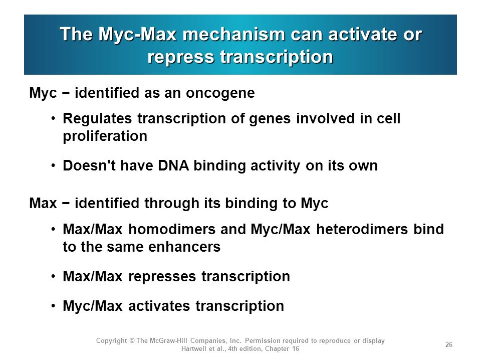The Myc-Max mechanism can activate or repress transcription Myc identified as an oncogene Regulates transcription of genes involved in cell proliferat