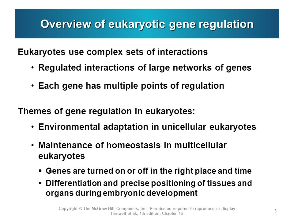 Overview of eukaryotic gene regulation Eukaryotes use complex sets of interactions Regulated interactions of large networks of genes Each gene has mul