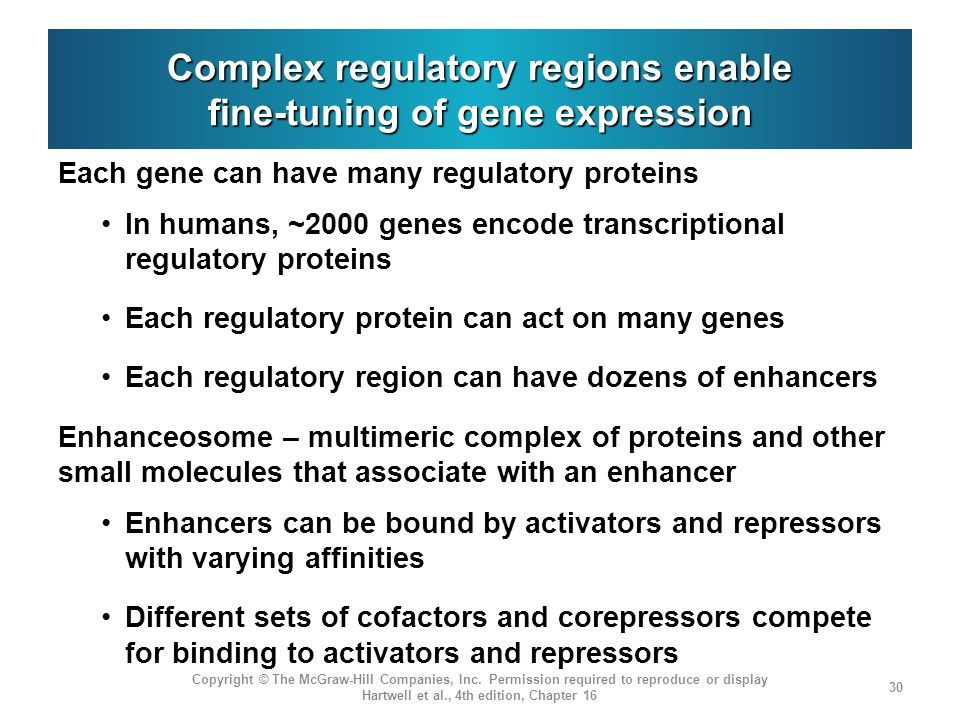 Complex regulatory regions enable fine-tuning of gene expression Each gene can have many regulatory proteins In humans, ~2000 genes encode transcripti