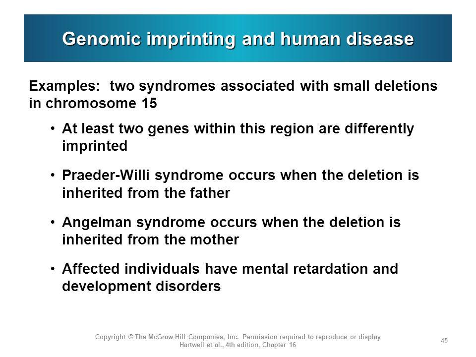 Imprinting Human Genomic Imprinting And Human