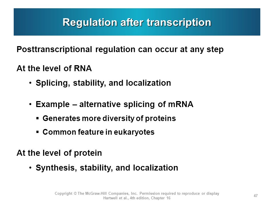Regulation after transcription Posttranscriptional regulation can occur at any step At the level of RNA Splicing, stability, and localization Example