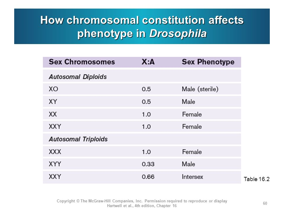 How chromosomal constitution affects phenotype in Drosophila Copyright © The McGraw-Hill Companies, Inc. Permission required to reproduce or display H