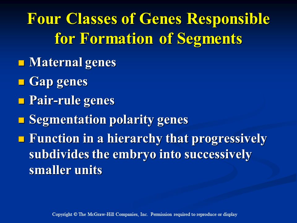 Copyright © The McGraw-Hill Companies, Inc. Permission required to reproduce or display Four Classes of Genes Responsible for Formation of Segments Ma