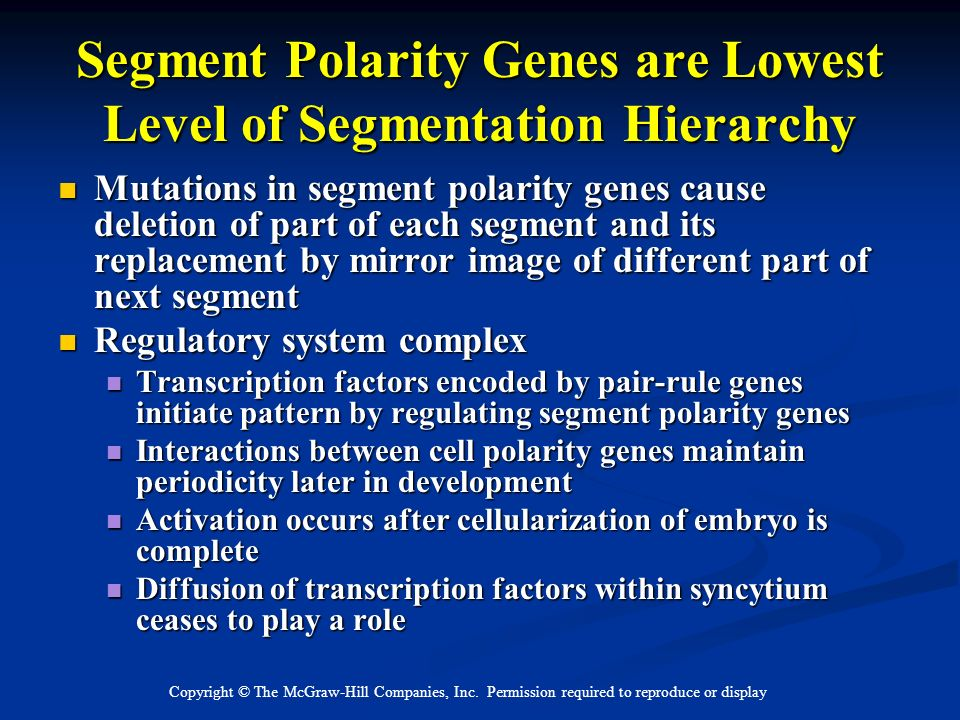 Copyright © The McGraw-Hill Companies, Inc. Permission required to reproduce or display Segment Polarity Genes are Lowest Level of Segmentation Hierar