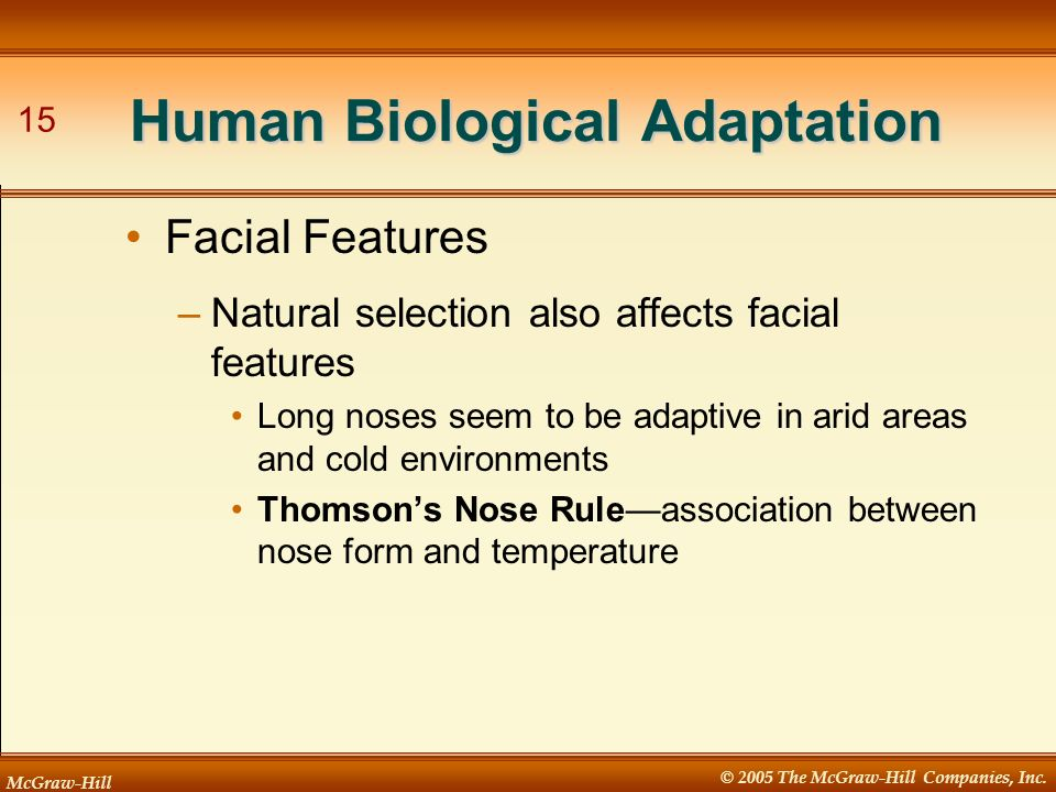 McGraw-Hill © 2005 The McGraw-Hill Companies, Inc. 15 Human Biological Adaptation –Natural selection also affects facial features Long noses seem to b
