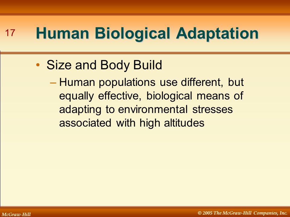 McGraw-Hill © 2005 The McGraw-Hill Companies, Inc. 17 Human Biological Adaptation Size and Body Build –Human populations use different, but equally ef