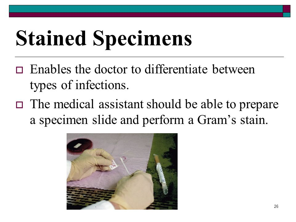 25 Direct Examination of Specimens Physician may examine specimens under the microscope to detect microorganisms. Two types of procedures: Wet mounts-