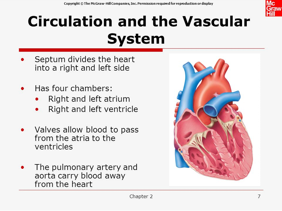Copyright © The McGraw-Hill Companies, Inc. Permission required for reproduction or display Chapter 26 The human vascular system consists of approxima