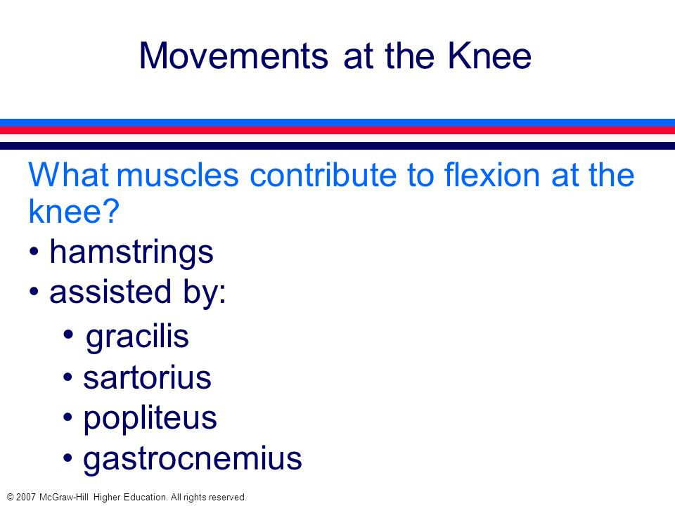 © 2007 McGraw-Hill Higher Education. All rights reserved. Movements at the Knee What muscles contribute to flexion at the knee? hamstrings assisted by