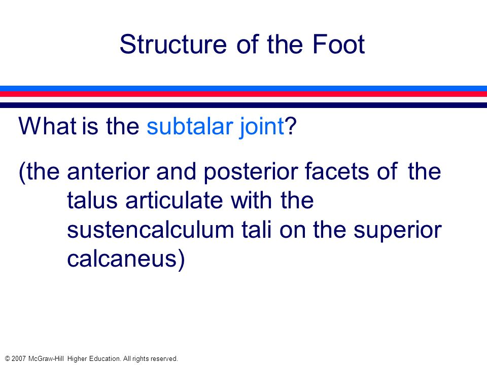 © 2007 McGraw-Hill Higher Education. All rights reserved. Structure of the Foot What is the subtalar joint? (the anterior and posterior facets of the