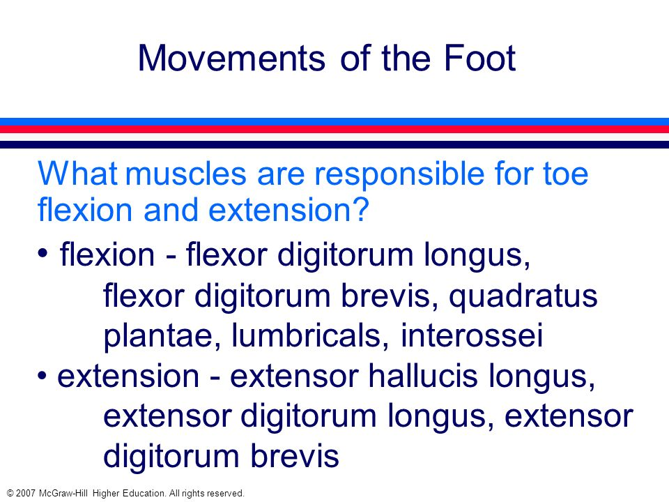 © 2007 McGraw-Hill Higher Education. All rights reserved. Movements of the Foot What muscles are responsible for toe flexion and extension? flexion -
