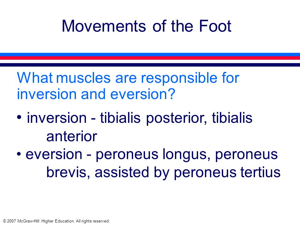 © 2007 McGraw-Hill Higher Education. All rights reserved. Movements of the Foot What muscles are responsible for inversion and eversion? inversion - t