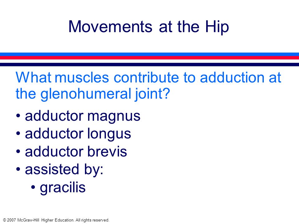 © 2007 McGraw-Hill Higher Education. All rights reserved. Movements at the Hip What muscles contribute to adduction at the glenohumeral joint? adducto