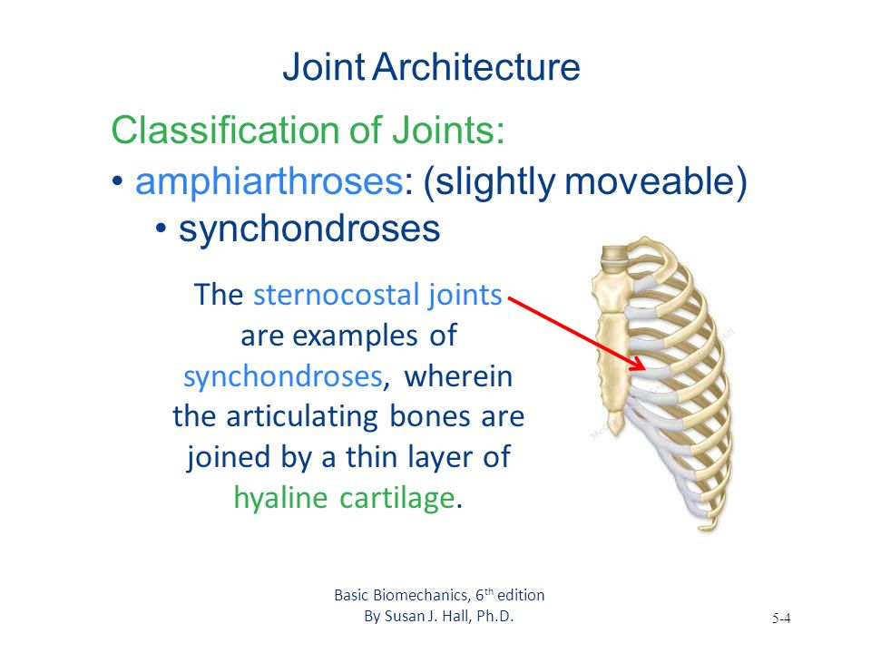 5-4 Joint Architecture Classification of Joints: amphiarthroses: (slightly moveable) synchondroses Basic Biomechanics, 6 th edition By Susan J. Hall,
