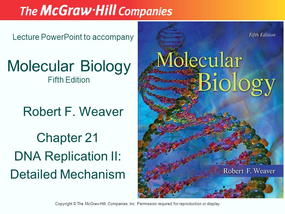 Molecular Biology Fifth Edition Chapter 21 DNA Replication II: Detailed Mechanism Lecture PowerPoint to accompany Robert F. Weaver Copyright © The McG