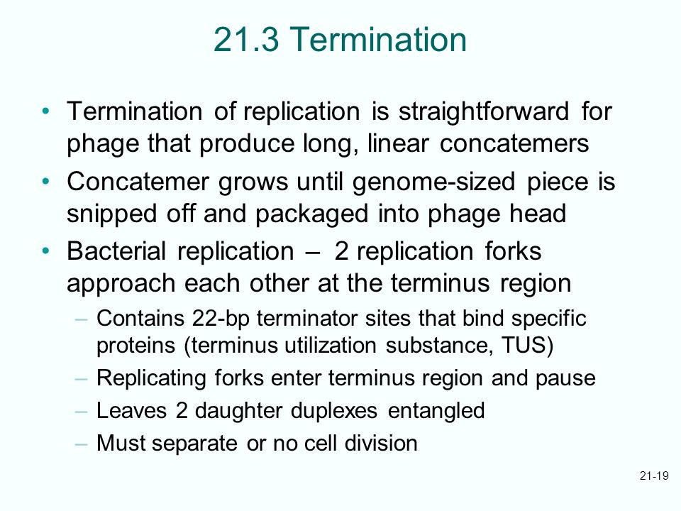 21-19 21.3 Termination Termination of replication is straightforward for phage that produce long, linear concatemers Concatemer grows until genome-siz