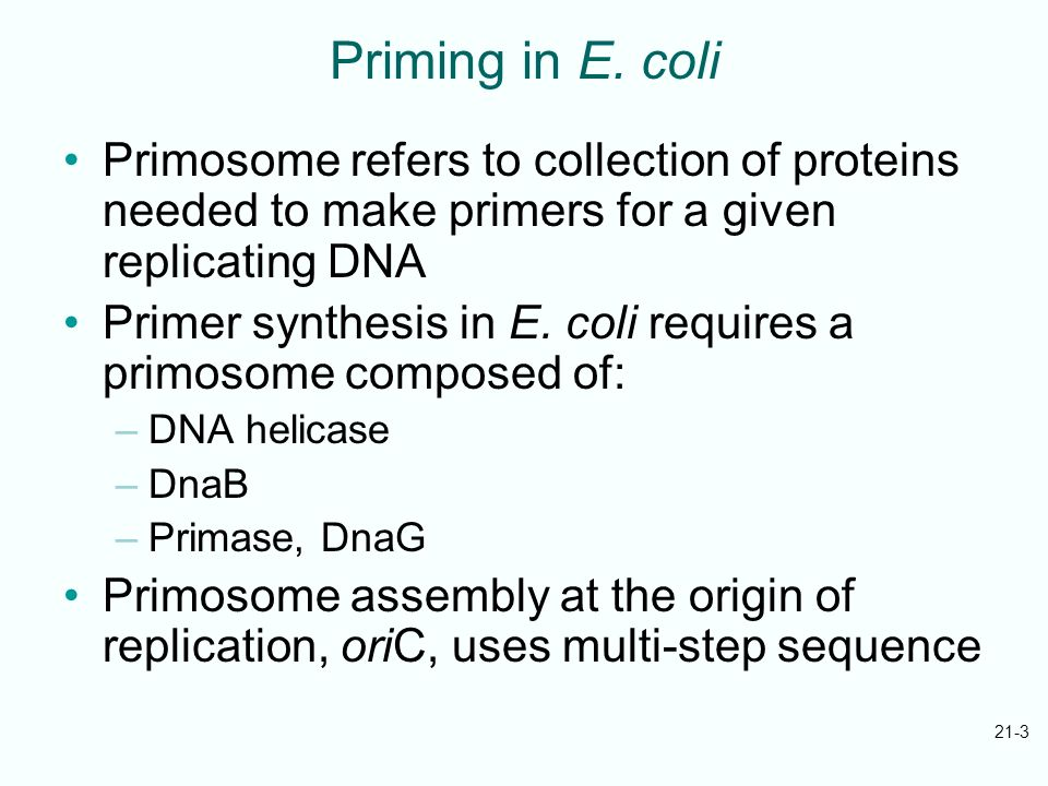 21-3 Priming in E. coli Primosome refers to collection of proteins needed to make primers for a given replicating DNA Primer synthesis in E. coli requ