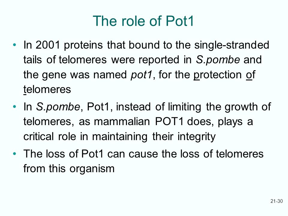 21-30 The role of Pot1 In 2001 proteins that bound to the single-stranded tails of telomeres were reported in S.pombe and the gene was named pot1, for