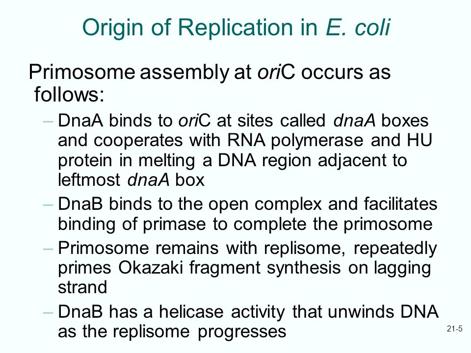 21-5 Origin of Replication in E. coli Primosome assembly at oriC occurs as follows: –DnaA binds to oriC at sites called dnaA boxes and cooperates with