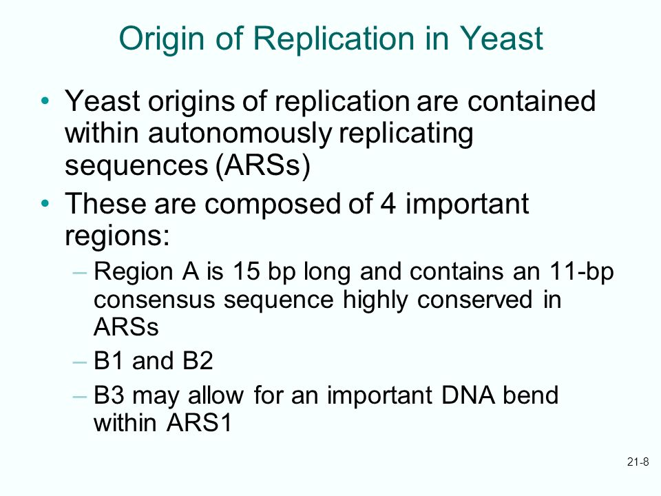 21-8 Origin of Replication in Yeast Yeast origins of replication are contained within autonomously replicating sequences (ARSs) These are composed of