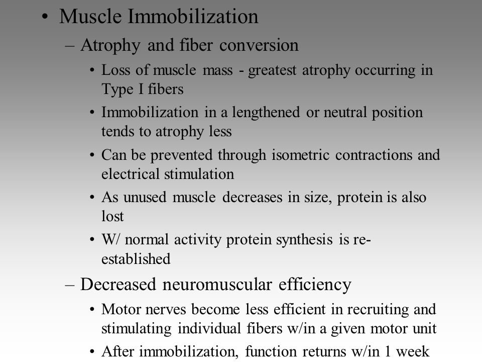 Muscle Immobilization –Atrophy and fiber conversion Loss of muscle mass - greatest atrophy occurring in Type I fibers Immobilization in a lengthened o