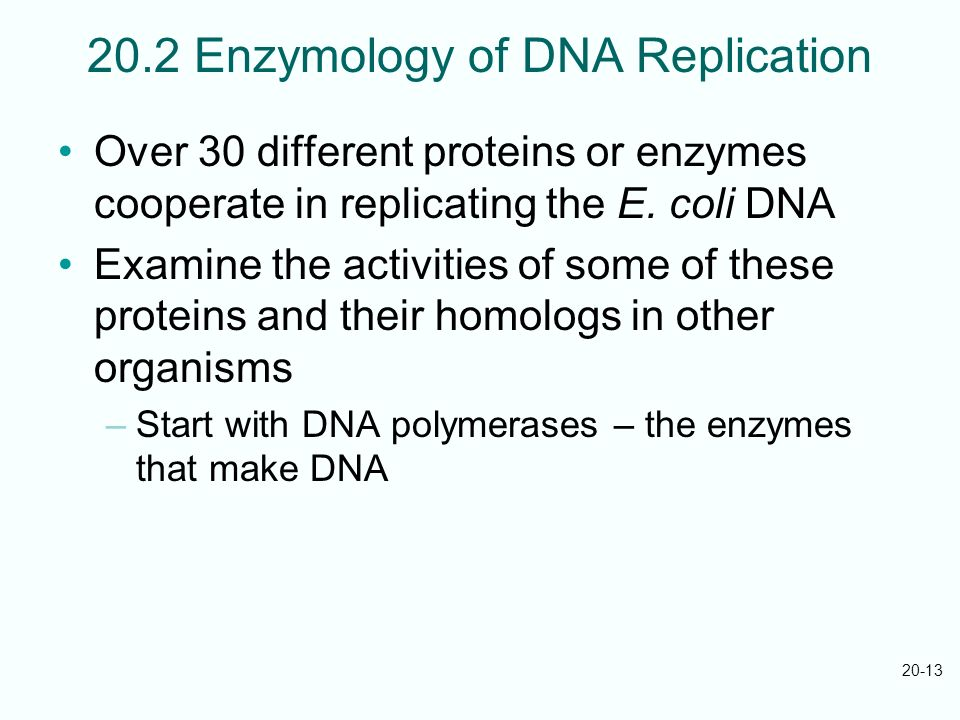 20-13 20.2 Enzymology of DNA Replication Over 30 different proteins or enzymes cooperate in replicating the E. coli DNA Examine the activities of some