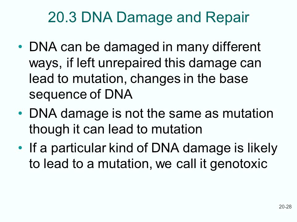 20-28 20.3 DNA Damage and Repair DNA can be damaged in many different ways, if left unrepaired this damage can lead to mutation, changes in the base s