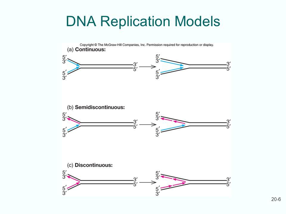 20-6 DNA Replication Models