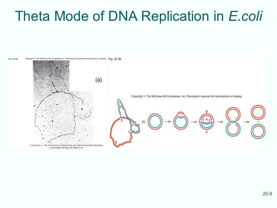 20-9 Theta Mode of DNA Replication in E.coli