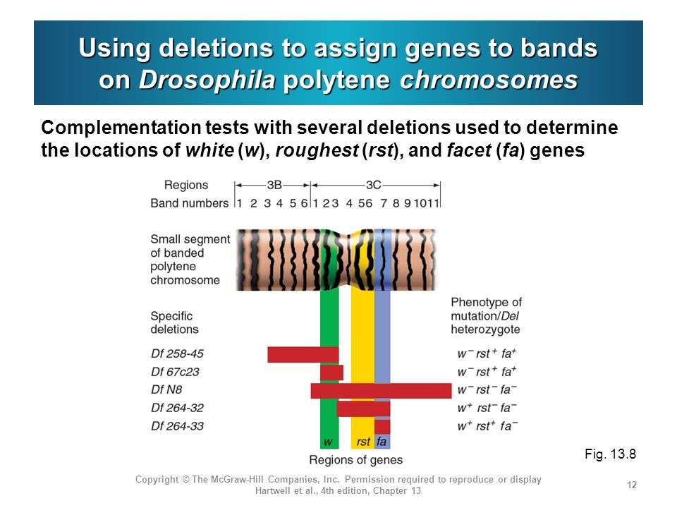 Using deletions to assign genes to bands on Drosophila polytene chromosomes Complementation tests with several deletions used to determine the locatio