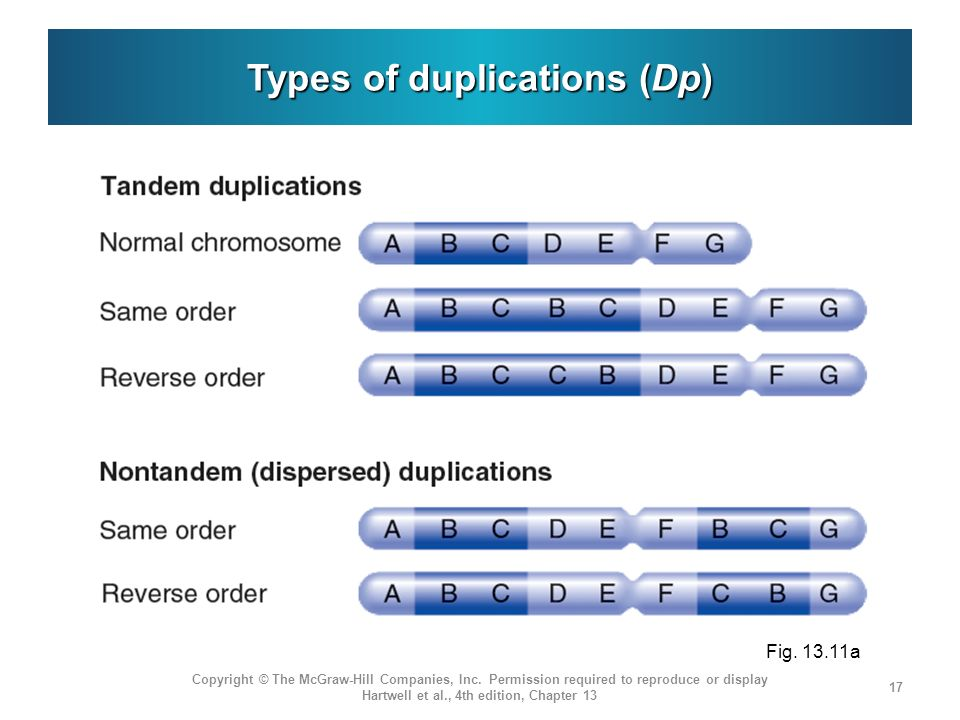Types of duplications (Dp) Copyright © The McGraw-Hill Companies, Inc. Permission required to reproduce or display Hartwell et al., 4th edition, Chapt