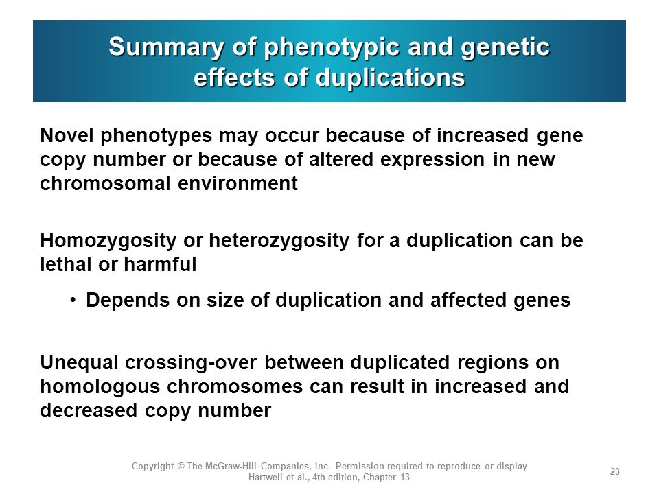 Summary of phenotypic and genetic effects of duplications Novel phenotypes may occur because of increased gene copy number or because of altered expression in new chromosomal environment Homozygosity or heterozygosity for a duplication can be lethal or harmful Depends on size of duplication and affected genes Unequal crossing-over between duplicated regions on homologous chromosomes can result in increased and decreased copy number Copyright © The McGraw-Hill Companies, Inc.