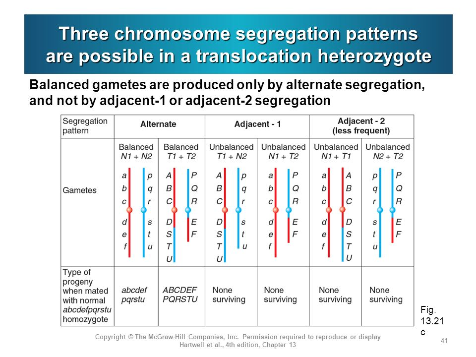 Three chromosome segregation patterns are possible in a translocation heterozygote Balanced gametes are produced only by alternate segregation, and no