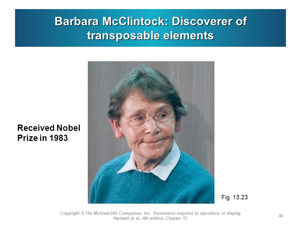 Barbara McClintock: Discoverer of transposable elements Received Nobel Prize in 1983 Copyright © The McGraw-Hill Companies, Inc. Permission required t
