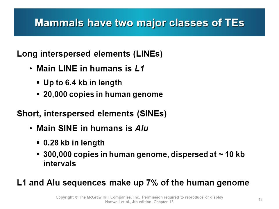 Mammals have two major classes of TEs Long interspersed elements (LINEs) Main LINE in humans is L1 Up to 6.4 kb in length 20,000 copies in human genom