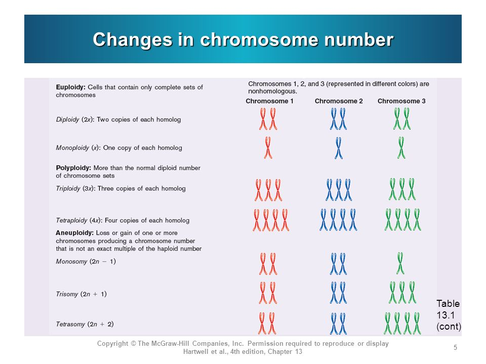 Changes in chromosome number Copyright © The McGraw-Hill Companies, Inc. Permission required to reproduce or display Hartwell et al., 4th edition, Cha