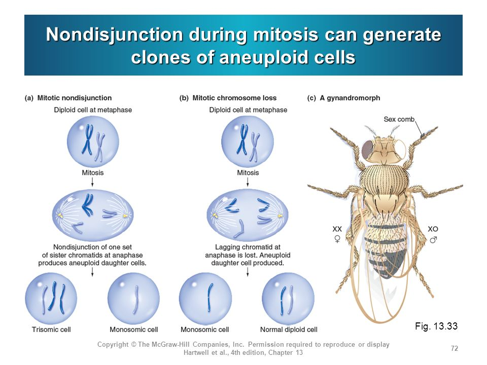 Nondisjunction during mitosis can generate clones of aneuploid cells Copyright © The McGraw-Hill Companies, Inc.