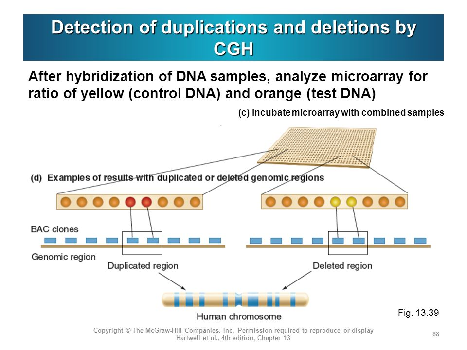 Detection of duplications and deletions by CGH After hybridization of DNA samples, analyze microarray for ratio of yellow (control DNA) and orange (te