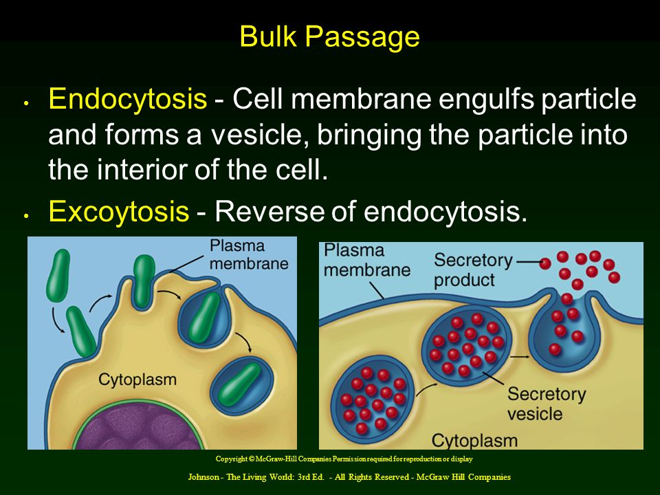 Johnson - The Living World: 3rd Ed. - All Rights Reserved - McGraw Hill Companies Bulk Passage Endocytosis - Cell membrane engulfs particle and forms
