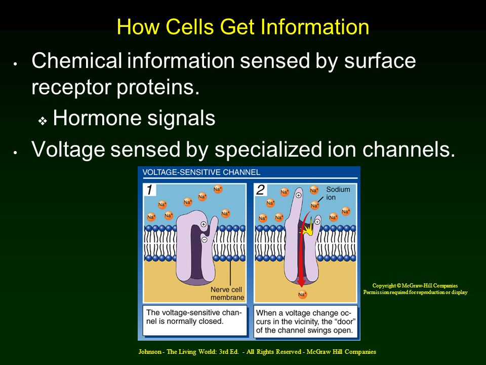 Johnson - The Living World: 3rd Ed. - All Rights Reserved - McGraw Hill Companies How Cells Get Information Chemical information sensed by surface rec