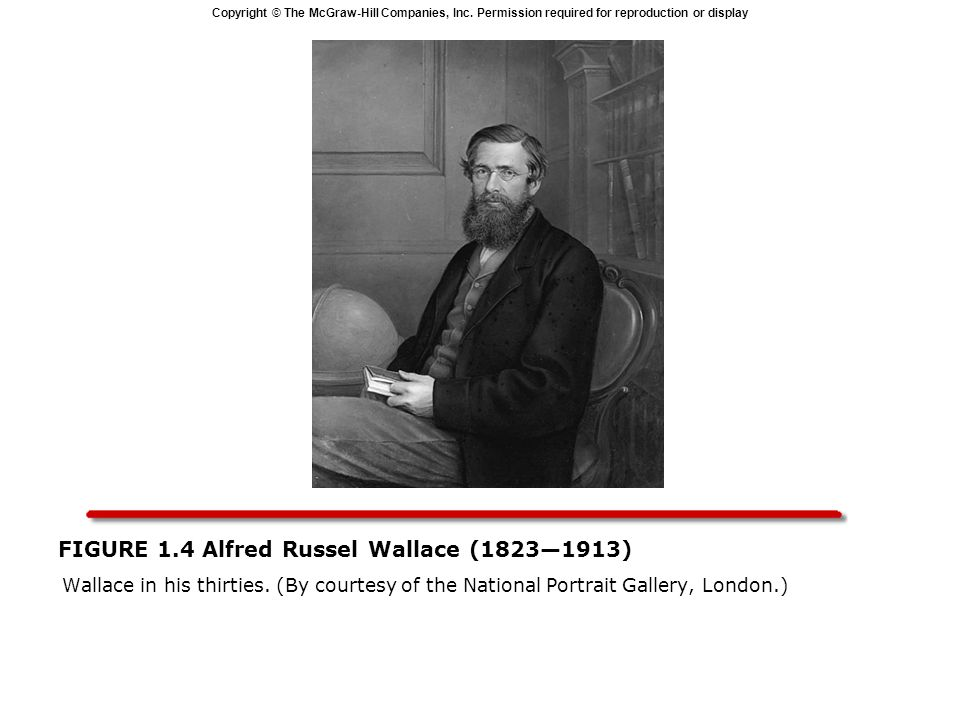 Copyright © The McGraw-Hill Companies, Inc. Permission required for reproduction or display FIGURE 1.4 Alfred Russel Wallace (18231913) Wallace in his