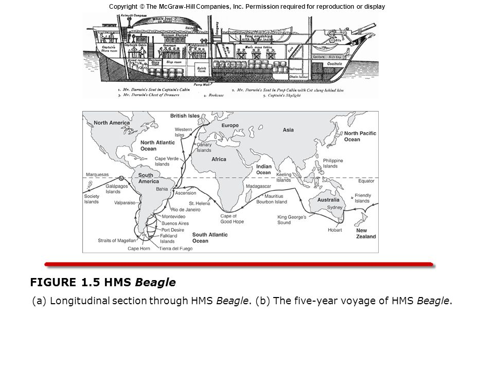 Copyright © The McGraw-Hill Companies, Inc. Permission required for reproduction or display FIGURE 1.5 HMS Beagle (a) Longitudinal section through HMS