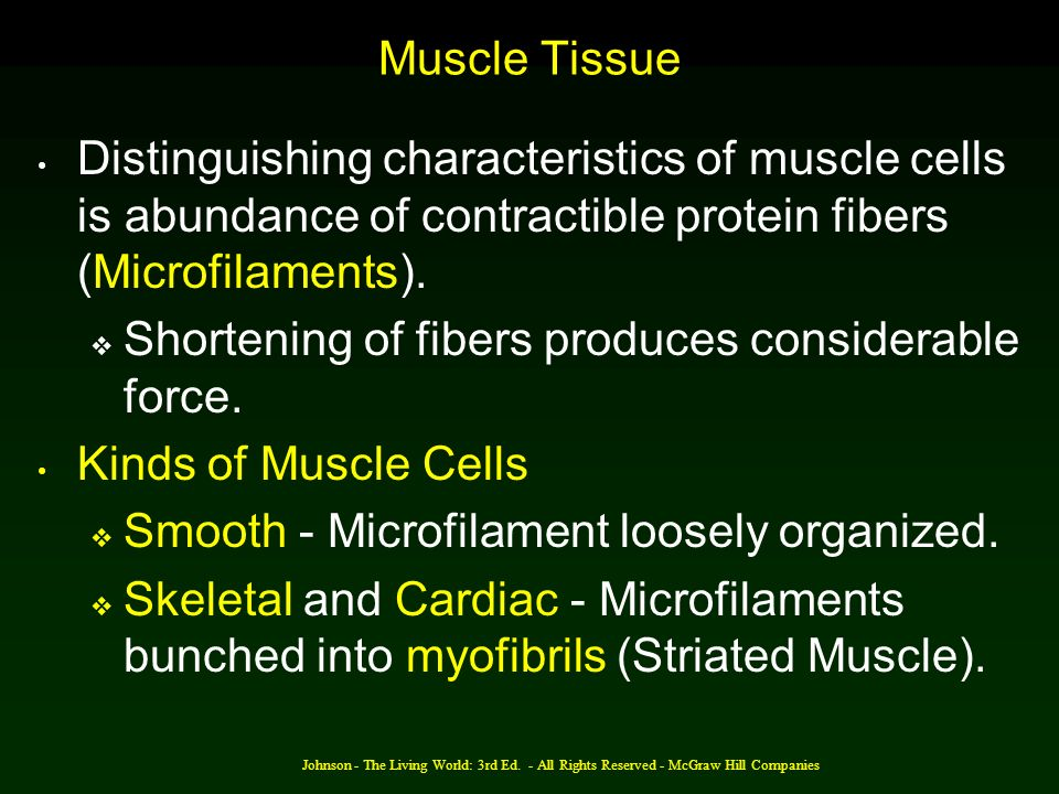 Johnson - The Living World: 3rd Ed. - All Rights Reserved - McGraw Hill Companies Muscle Tissue Distinguishing characteristics of muscle cells is abun